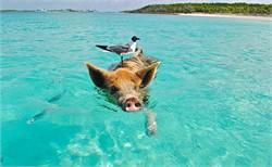 Best Caribbean Island to Retire in 2016