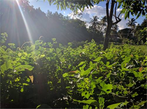 Mixed Use Land for Sale in St Lucia Caribbean - 6 Acres